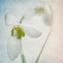 Springflower von Annie Snel - van der Klok