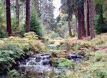 Hidden Valley, Rambling Stream von Roger Butler