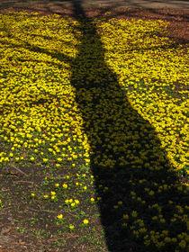 Schattenparker von photonenstube