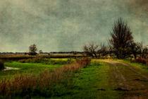 Cloudy Day by Annie Snel - van der Klok