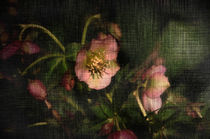 Frühlingsgruß  von Barbara  Keichel