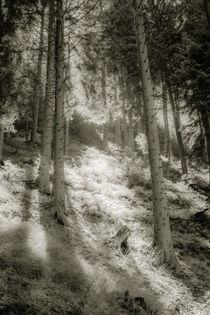 Antholzer Tal von Marcus A. Hubert