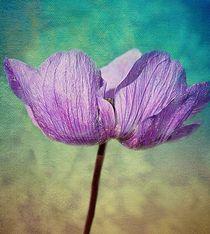 Purple Anemone. von rosanna zavanaiu
