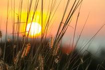 Sunset hays! by Kristiina  Hillerström