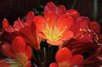 Frühlingsblüte  von Barbara  Keichel