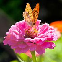 100807-029-26-farfalla01