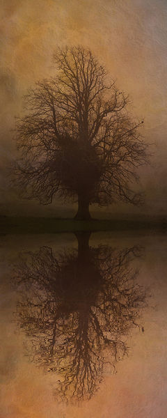 Tree-skeleton-reflection-iii