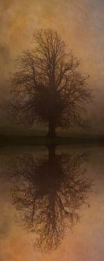 Tree-skeleton-reflection-iii
