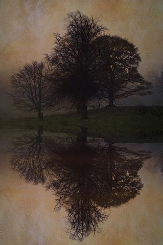 Tree-skeleton-reflection-iv