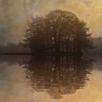 Tree Reflections II by David Pringle