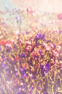 Sommerwiese by bieberchen