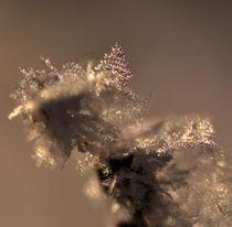 Winter2 von Eckart  Mayer