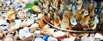Shells by Tyrone Castelanelli