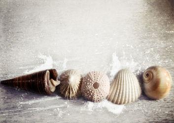 Seashellsbytheseashore-l-c-sybillesterk