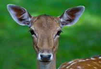 Bambi von bieberchen