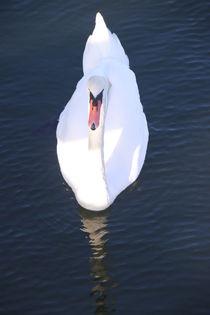 Gliding swan von Mircea Nicolescu