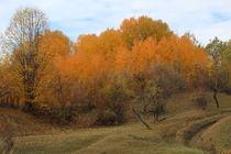 Autumn foliage von Mircea Nicolescu