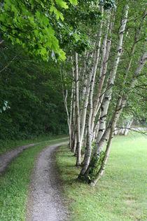 Birch trees by Mircea Nicolescu