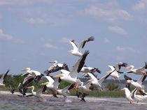 Snow Birds Heading South von Marilyn Holkham