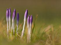 Frühlingserwachen von Carsten Fischer