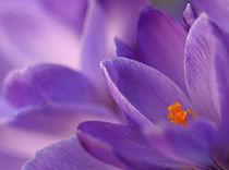 Frühlingsblühen von Brigitte Deus-Neumann
