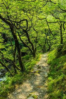 Woodland Path von Craig Joiner
