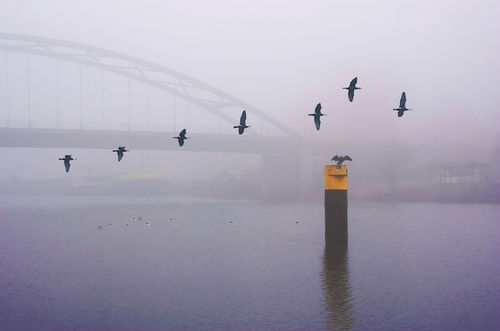 Kormorane-im-nebel2-srgb