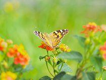 Butterfly von juliane-brueggemann