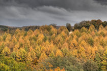 Autumn Light by David Tinsley