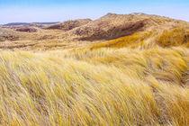 Dune the nederlands by Leandro Bistolfi