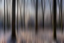 Winter Beech Woods by David Tinsley
