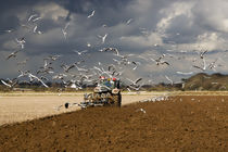 A Flock of Seagulls by David Tinsley