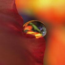 Wasser-Tropfen, Makro, auf Blüte. Water drop on blossom von Dagmar Laimgruber