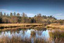 Woorgreens Lake by David Tinsley