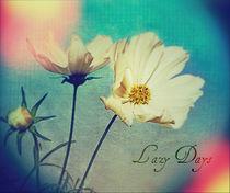 Summer Cosmos by rosanna zavanaiu