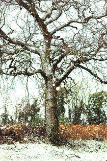 Winter Snow von rosanna zavanaiu
