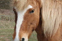 Pferd_Ruhephase von mariso