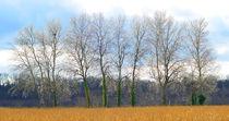 Baumgruppe-winterlicher-himmel