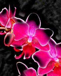 Neon Orchid by Roger Butler
