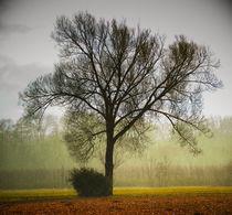 Baum im Regen. Weingarten von Elmar Theurer