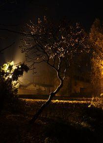 Es war einmal ein Baum... by anowi