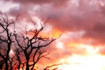 silhouette of a tree by dizdetcpizainy