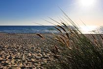 Am Strand  by Olaf von Lieres
