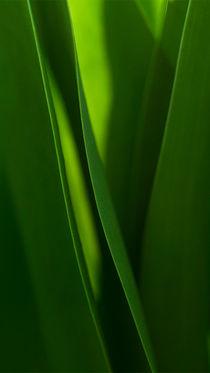 green spring von Doina Russu