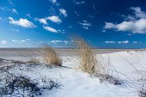 Dünengras - Dune Grass von Hans Sterr