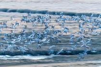 Im Flug - Birds in flight by Hans Sterr