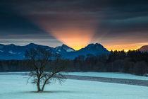 Morgenscheinwerfer - Morning limelight von Hans Sterr