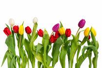 Frühlingsblumen von Olaf von Lieres