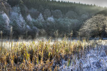 Frosty Start by David Tinsley