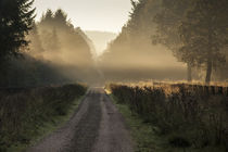 Misty Morn by David Tinsley